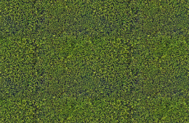 dark green moss seamless background