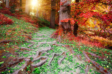 Beautiful autumn forest landscape © Grecaud Paul