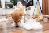 Welpe soielt mit seinem Stofftier