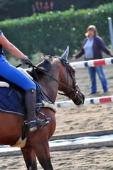 cavallo pronto al salto