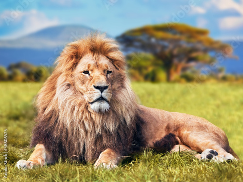 Poster Big lion lying on savannah grass. Kenya, Africa