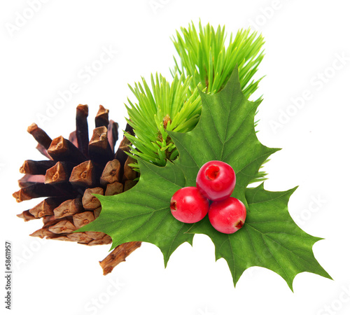 Pine tree branch with cone and holly berry isolated on white.