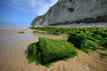 Stones, overgrown with green algae at Nord-Pas-de-Calais