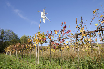 The scarecrow in vineyard