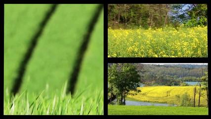 Paix intérieure et nature