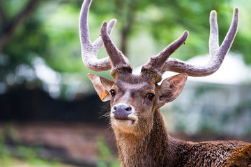 head shot of deer