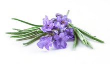 Lavender. Flowers isolated on white