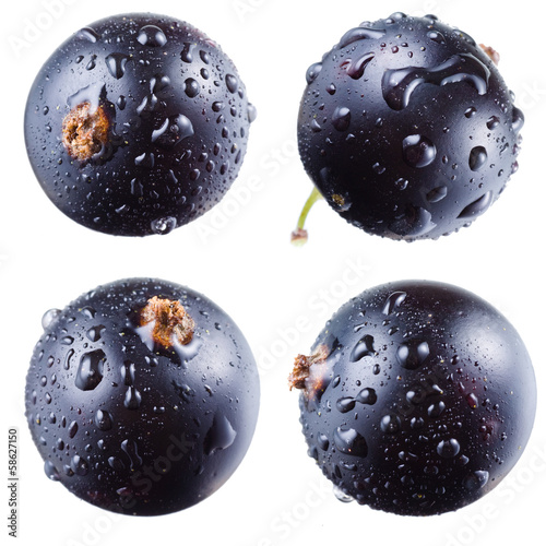Black currant with drops on white