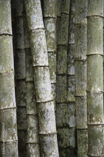 In de dag Bamboo Eco-Friendly Tropical Bamboo Trees Full Frame Vertical