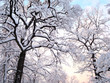 canvas print picture - Winter trees