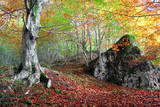 forest in autumn with a rock