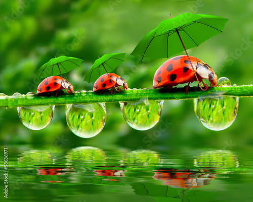 Little ladybugs with umbrella.
