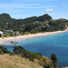 New Zealand beach - Coromandel