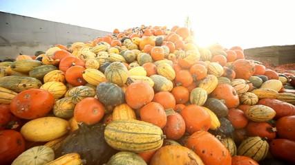 Überproduktion von Lebensmitteln - Kürbisse