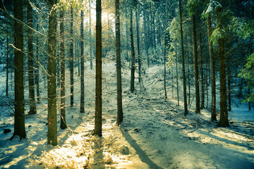 Morgensonne im Winterwald
