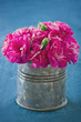 Carnation flowers on demin blue background