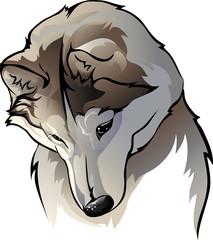 shy wolf
