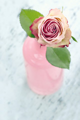 Pink rose in a glass bottle
