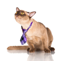 funny cat in a tie