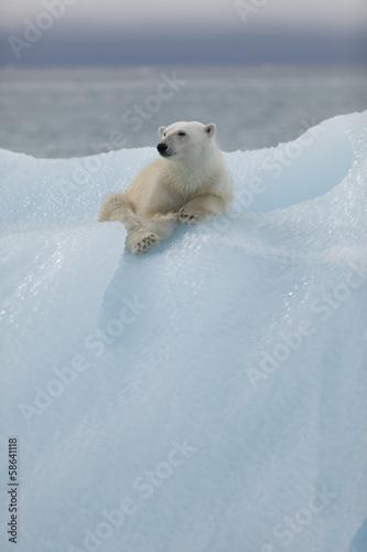 Foto op Aluminium Antarctica 2 Polar bear in Svalbard