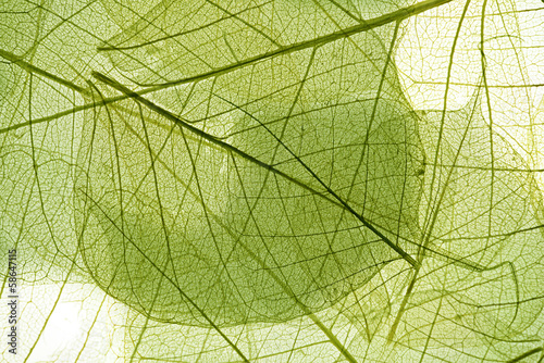 leaves background - 58647115