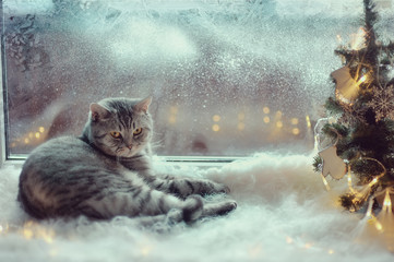 Cat in the winter window