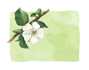Background with watercolor apple flowers