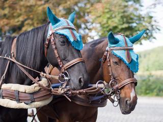 Geschmückte Pferde - Kutschfahrt