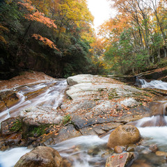 autumn,forest and stream,guang wu shan,sichuan,c hina
