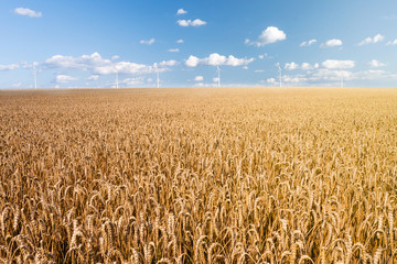 wheat field wind generator