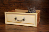 Gray Cat in a Vintage Yellow Drawer