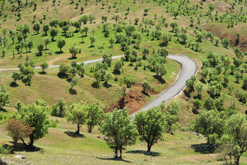 Green landscape with olive trees and road in countryside.