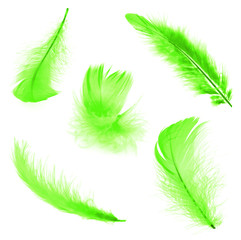 Five green feathers