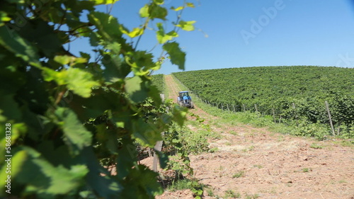 bush green grapes with a tractor