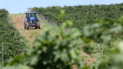 blue tractor, vine leaves around