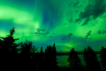 Intense green northern lights over boreal forest