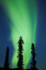 Yukon taiga spruce Northern Lights Aurora borealis