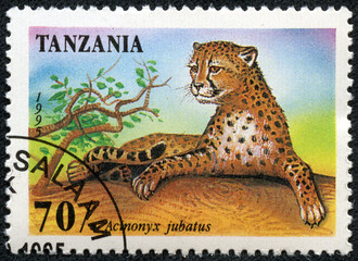 stamp printed in Tanzania shows an African animal - Leopard