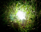 energy-saving lamp in green grass