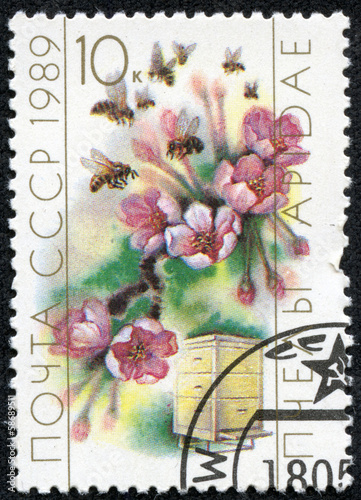 stamp printed in the USSR shows worker bee collecting pollen