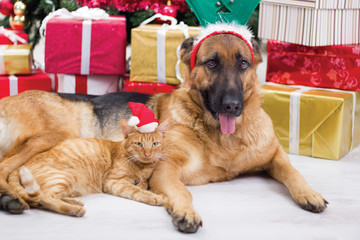 two best friends dog and cat in Christmas night