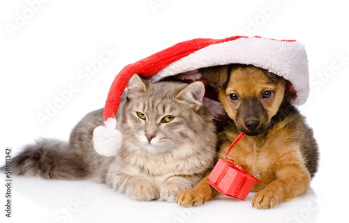 cat and dog with santa hat and red box. isolated on white