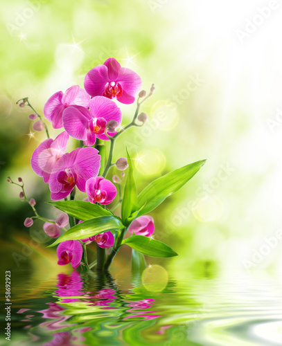 Panel Szklany beautiful orchid and bamboo for border treatment spa on water