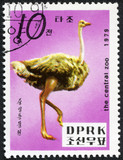stamp printed in North Korea shows Ostrich