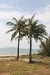 Постер, плакат: пальмы