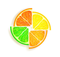 lemon, orange, lime and grapefruit
