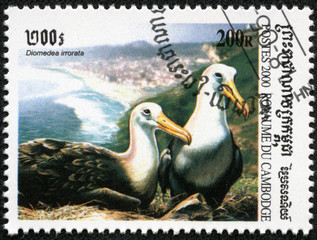 stamp printed in Cambodia showing albatross(diomedea irrorata)