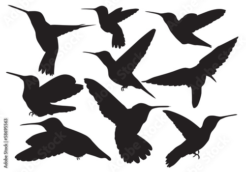 Vector hummingbird of silhouette