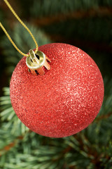 One red christmas ball hanging on a tree.