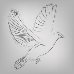 Vector sketched dove